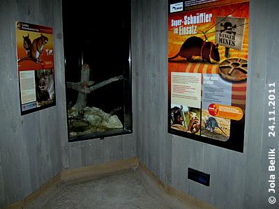 In der Ecke bei den Riesenhamsterratten mit den toll gestalteten Infotafeln, Rattenhaus, 24. November 2011