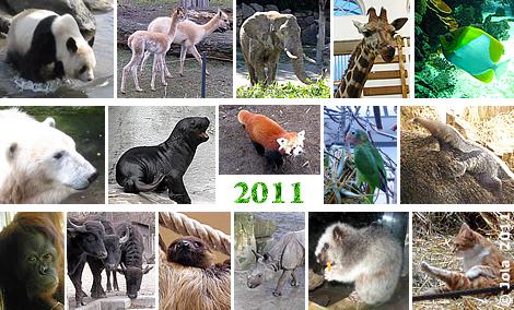 Einige Impressionen aus dem Jahr 2011 ...