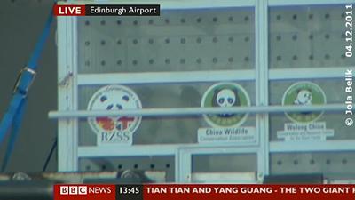 Transportkiste mit Yang Guang an der Laderampe vom FedEx Panda Express, Flughafen