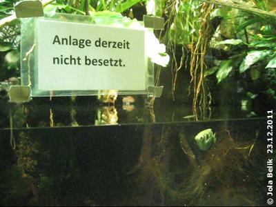 Ein einzelner Fisch - bedeutet das besetzt oder nicht besetzt, das ist hier die Frage! Im Regenwaldhaus, 23. Dezember 2011