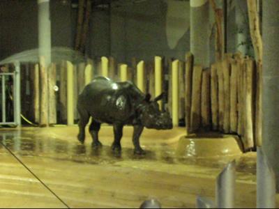 ... und macht Spaß! Sundari, 7. Dezember 2011 (Screenshot aus Video)