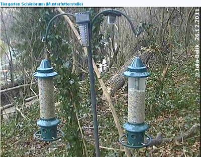 Musterfutterstelle mit Webcam , 26. Dezember 2011 (Screenshot von Webcam)