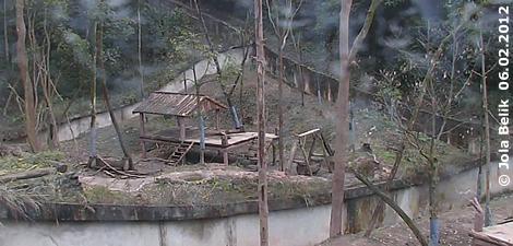Blick auf Fu Longs neuen Garten, 6. Februar 2012 (Screenshot von Pandacam)