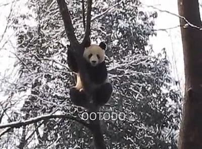 ... kasperlt der Lauser auf dem Baum herum, Bi Feng Xia, Februar 2012