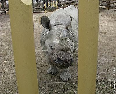 Nashörner sind ja überhaupt nicht neugierig, oder doch? Jange, 19. März 2012