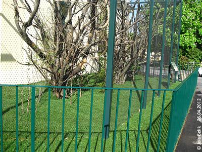 ... und von den PFlegern Seile und andere Enrichment-Elemente! Außenanlage der Mini-Äffchen, 26. April 2012