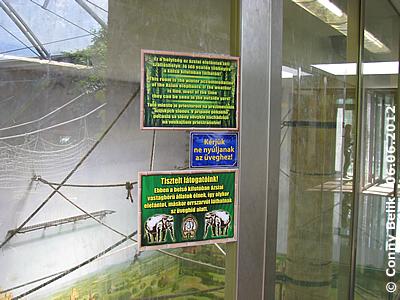 ... hinter den Infotafeln ist die Malerei unten an der Wand gut erkennbar. Glasgang zur Dach-Voliere in der Grünen Pyramide, Sóstó Zoo, 6. Juni 2012