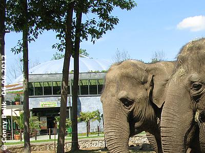 """Blick von der Außenanlage der Asiatischen Elefanten aus auf die Kuppel der Grünen Pyramide, darunter der Eingang zum """"Bambus Restaurant"""", Sóstó Zoo, 6. Juni 2012"""