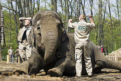 Das tut sooo gut! Sóstó Zoo, 21. April 2010