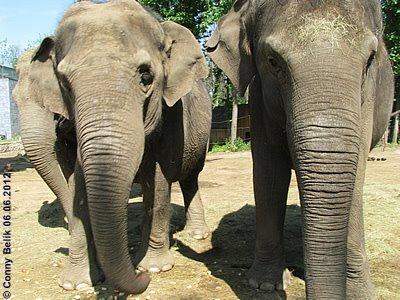 Yasmine, Motki und Tanya im Sóstó Zoo, 6. Juni 2012