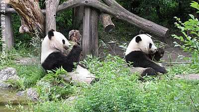 Fu Hu und Yang Yang, 22. Juli 2012