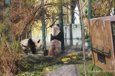 Fu Hu und Yang Yang