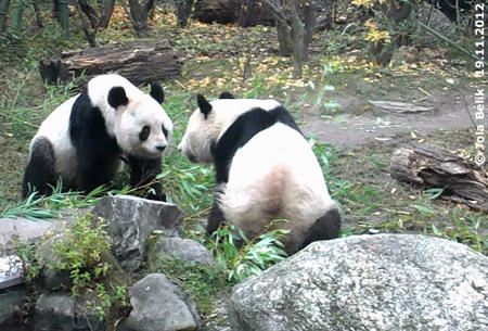 Yang Yang und Long Hui
