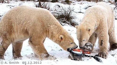 Walker und Arktos