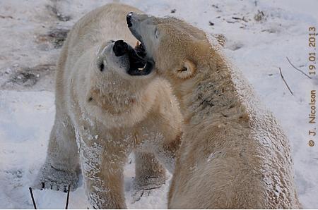 Arktos und Walker