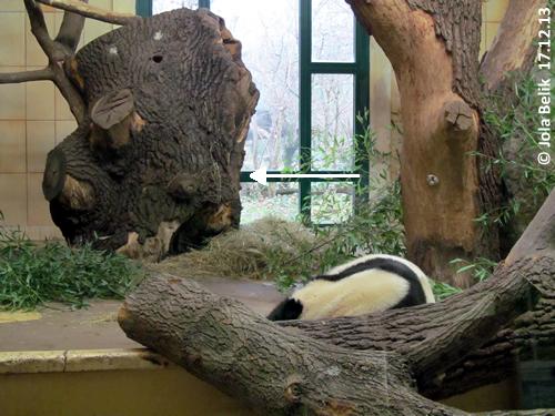 Baumhöhle Pandahaus