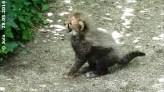 MIni-Gepard