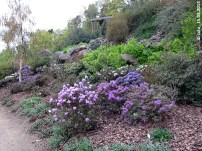Himalaya-Garten