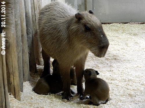 Nancy mit Babys