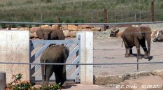 Kibo, Chupa und Safari