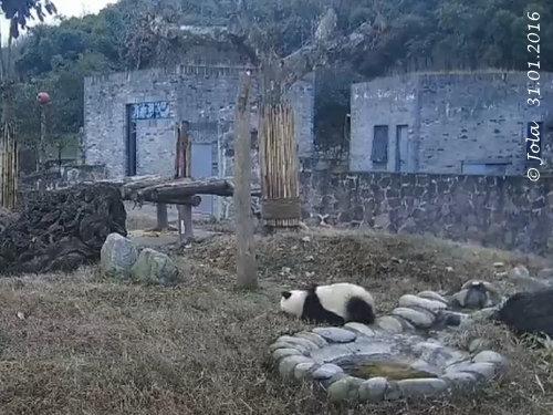 Fu Bao