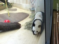 Fu Feng und Yang Yang im Haus
