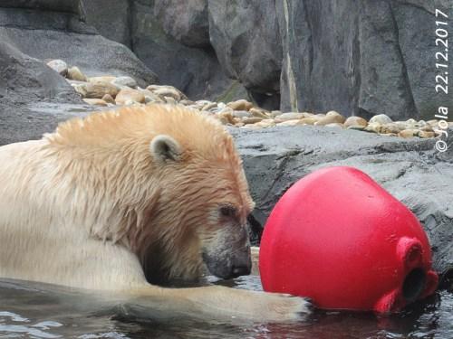 Lynn und roter Ball