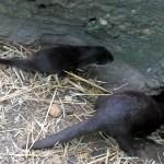 Otterbaby #1