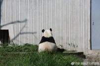 Fu Hu