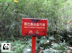 Bambusplantage