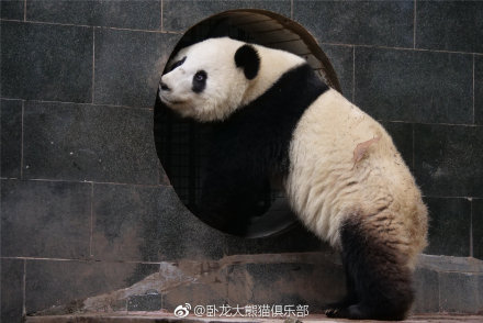 Fu Ban