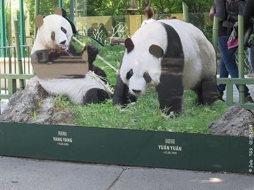 Panda-Tafel