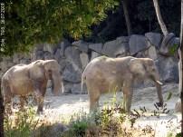 Drumbo und Mongu