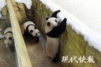 Fu Feng und Fu Ban