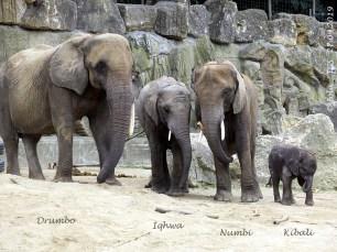 Drumbo, Iqhwa, Numbi und Kibali