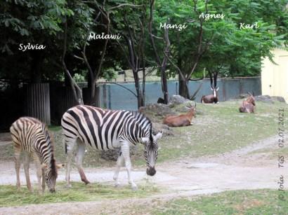 Sylvia, Malawi, Manzi, Agnes und Karl
