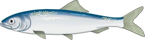 Рыбы, аквариумные рыбки, клипарт, клипарты животные рыбы, cl…