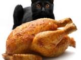 Este indicată alimentaţia umană pentru pisici