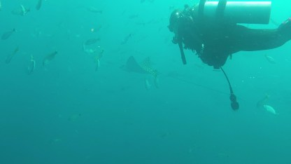 Me with eagle ray