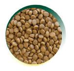 Mangus del Sole - Cat Grain Free Salmone. 2kg