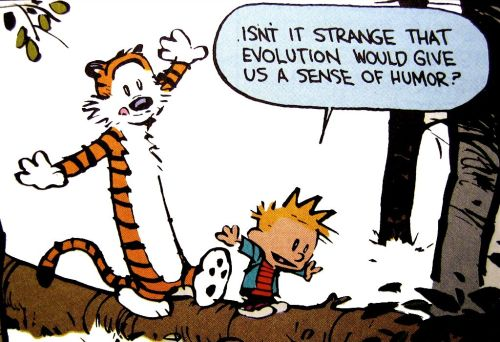 calvin and hobbes – evolutionary humor