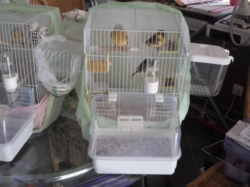 Cage Pliable Pour Oiseau DOLAK Cage Petits Oiseaux