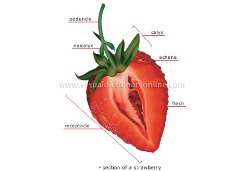fleshy-fruit-berry-fruit_3