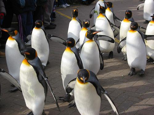 tux-pinguini-invasione.jpg