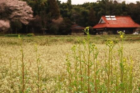 japanese-farm