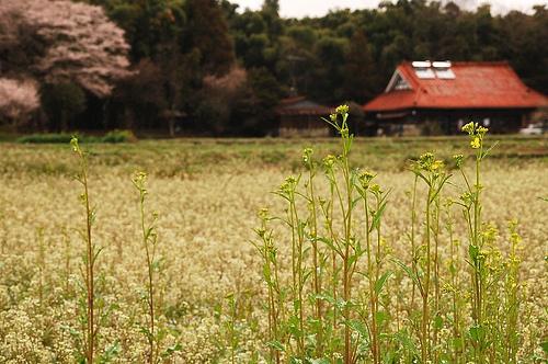 Se sei disoccupato torni a lavorare nei campi: filosofia nipponica