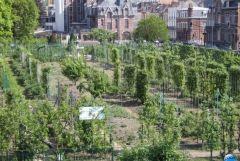 Jardin Fruitier 01