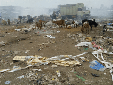 Goats feeding at the Viwandani dump site