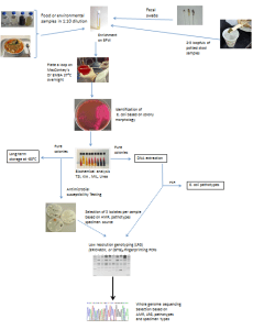 Microbiology component