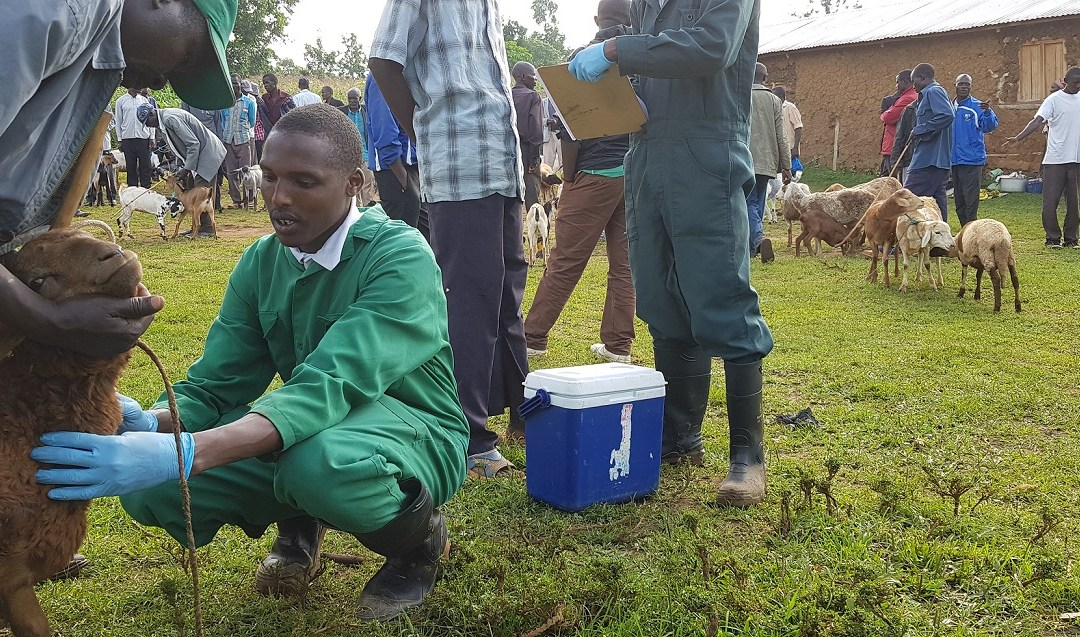 Surveillance of zoonoses in livestock and humans: experiences from AHITI interns cohort 5